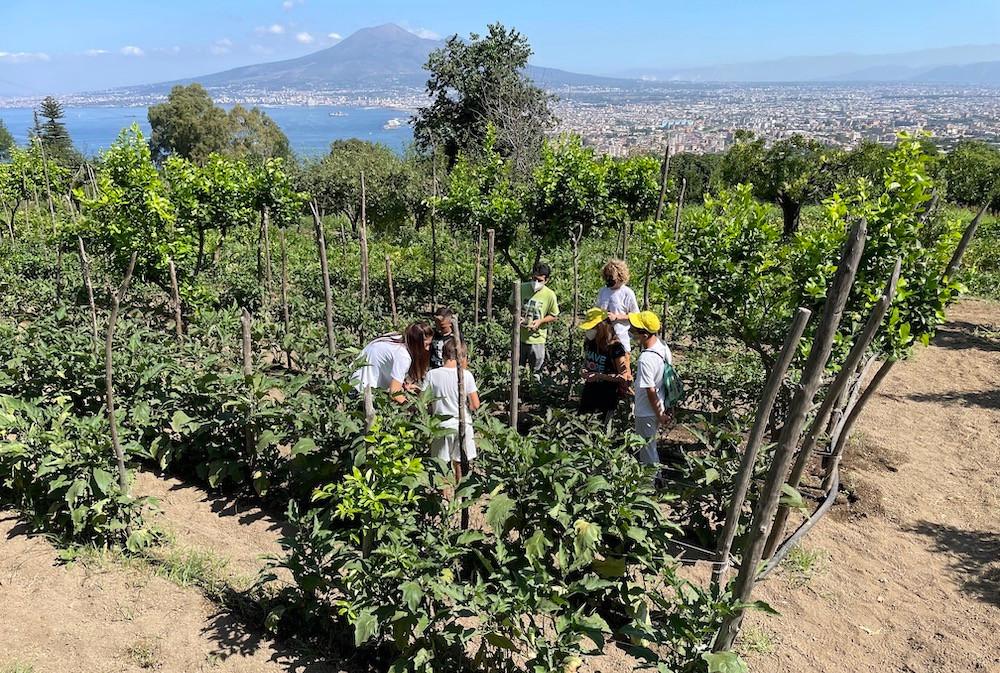 I campi di pomodorini lampadina nell'azienda biologica Dama sulla collina di Quisisana