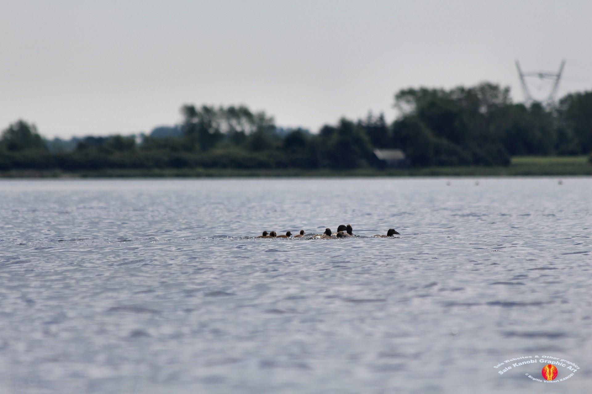 Odense Fjord Kayak 17
