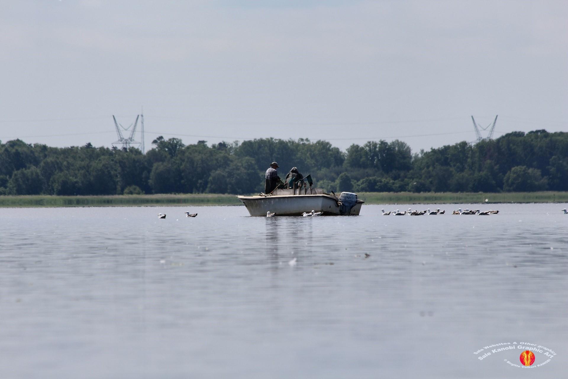 Odense Fjord Kayak 2