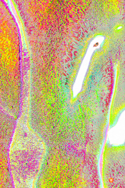 Levitation Lights Flamingo's