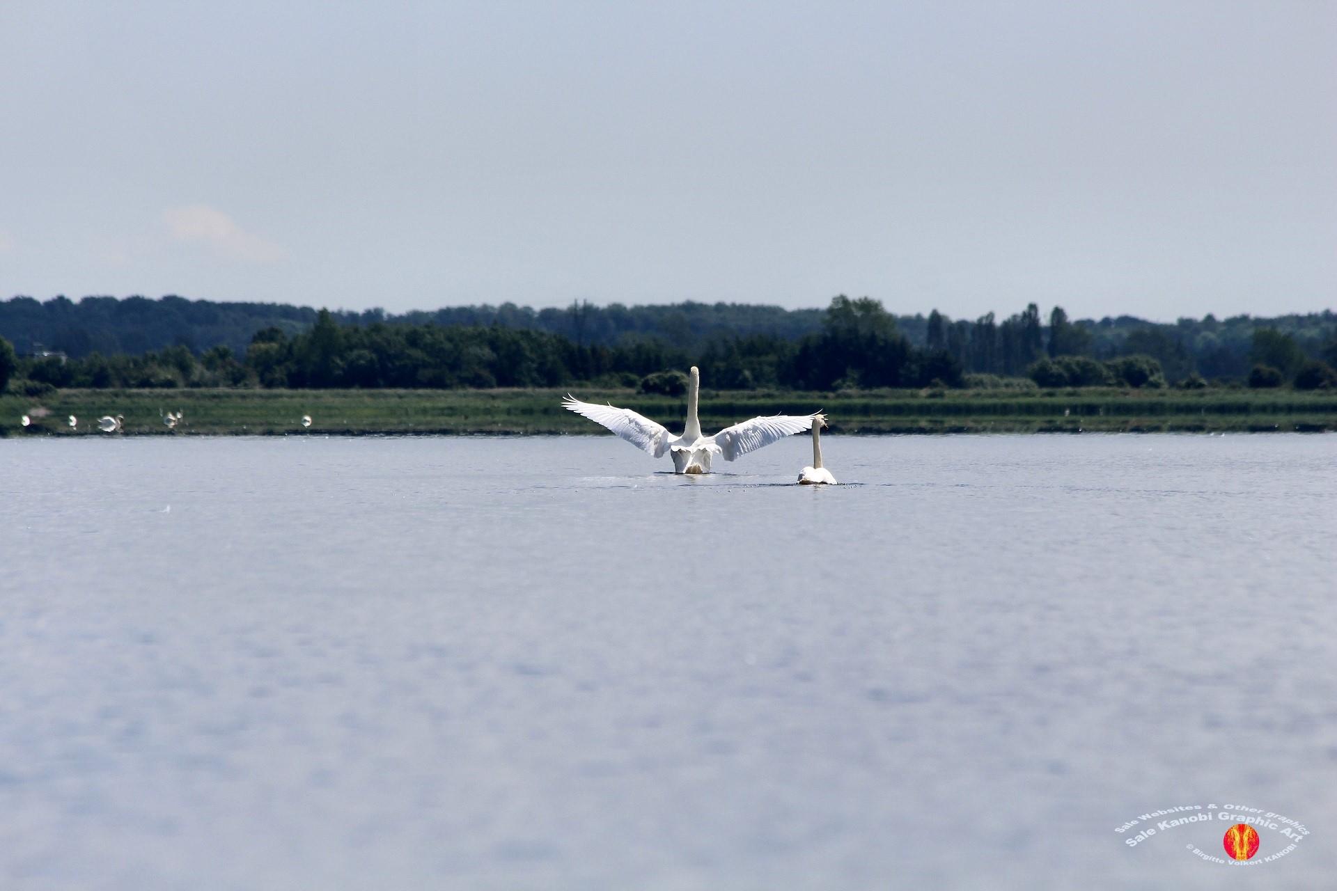 Odense Fjord Kayak 9