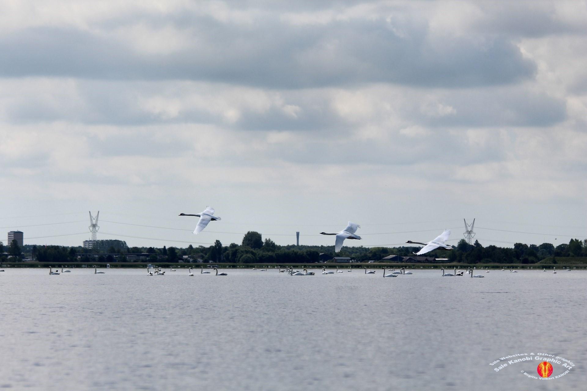 Odense Fjord Kayak 16