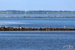 Otterup Harbour 39