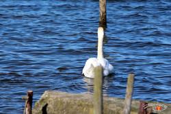 Otterup Harbour 15