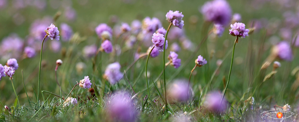 GDPR Favorite Flowers KanobiR..png