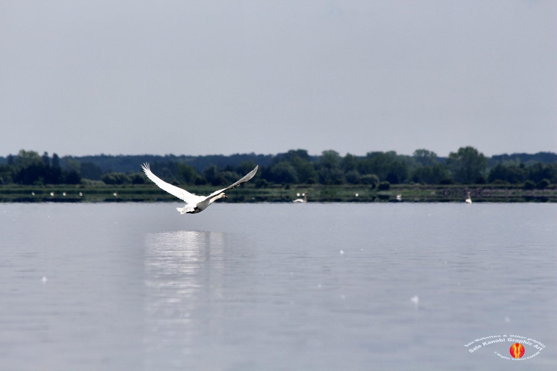 Odense Fjord Kayak 5