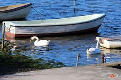 Otterup Harbour 14