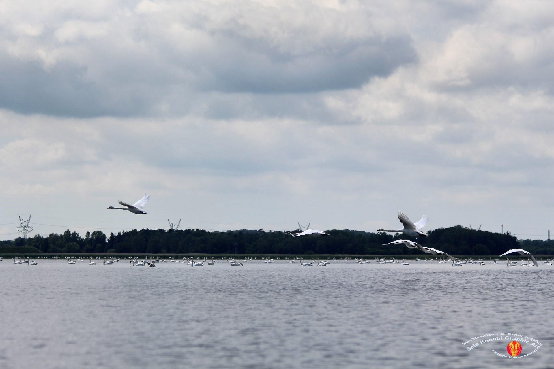 Odense Fjord Kayak 13