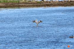 Otterup Harbour 37