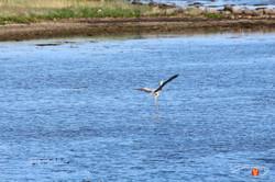 Otterup Harbour 35