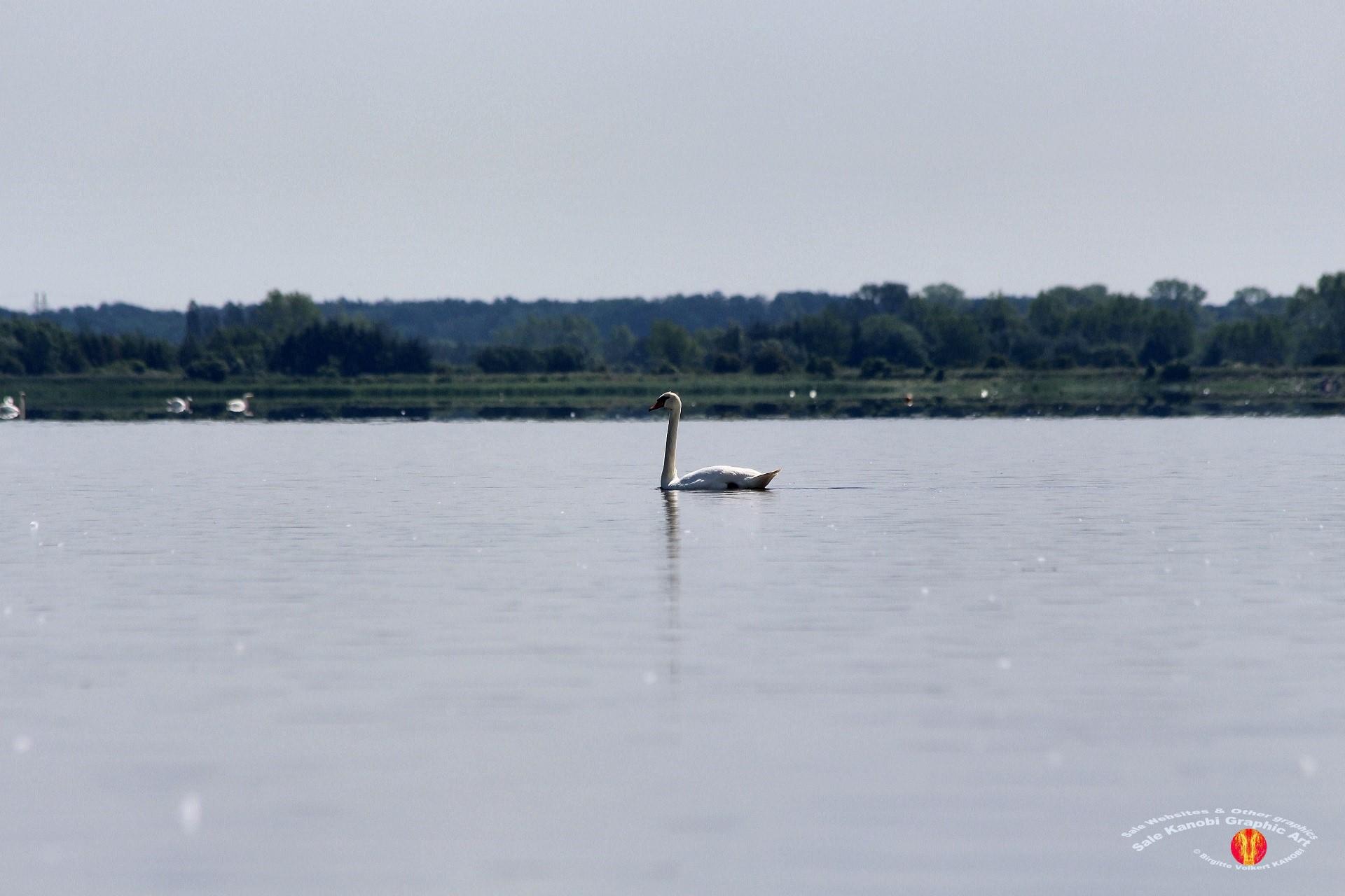 Odense Fjord Kayak 3