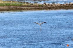 Otterup Harbour 36