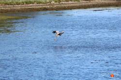 Otterup Harbour 34