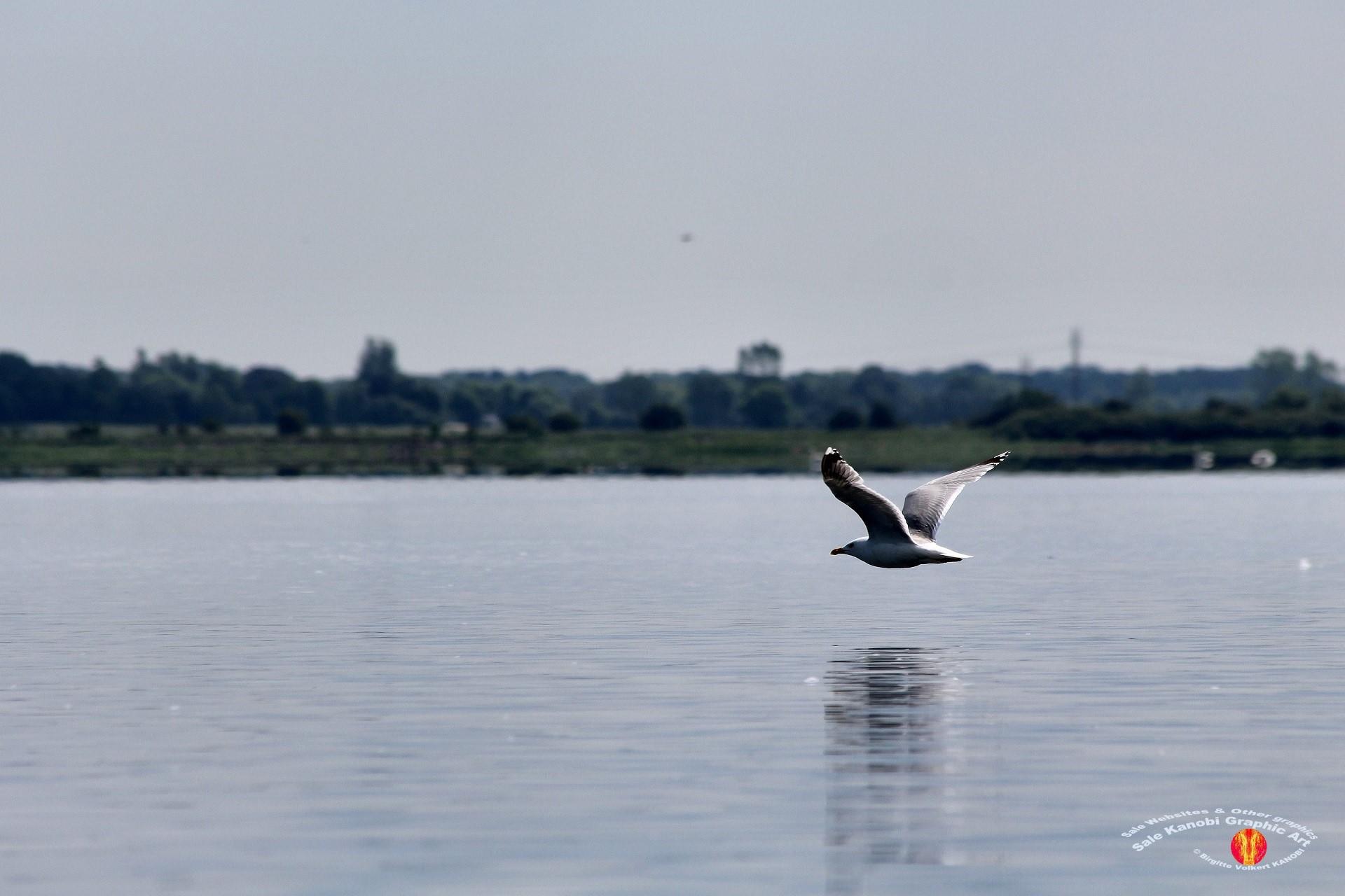 Odense Fjord Kayak 7