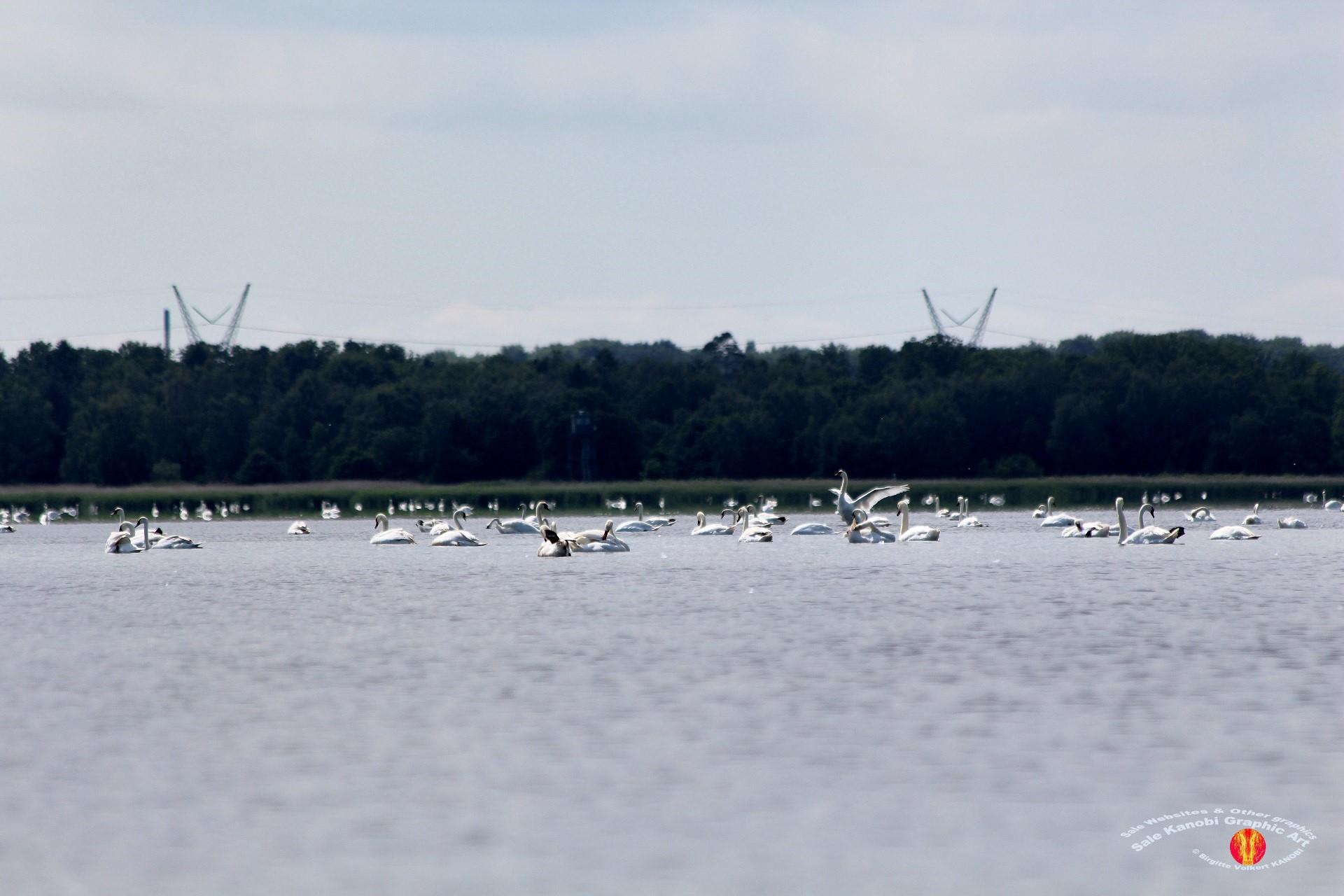 Odense Fjord Kayak 8