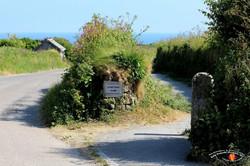 Village Lizard 46