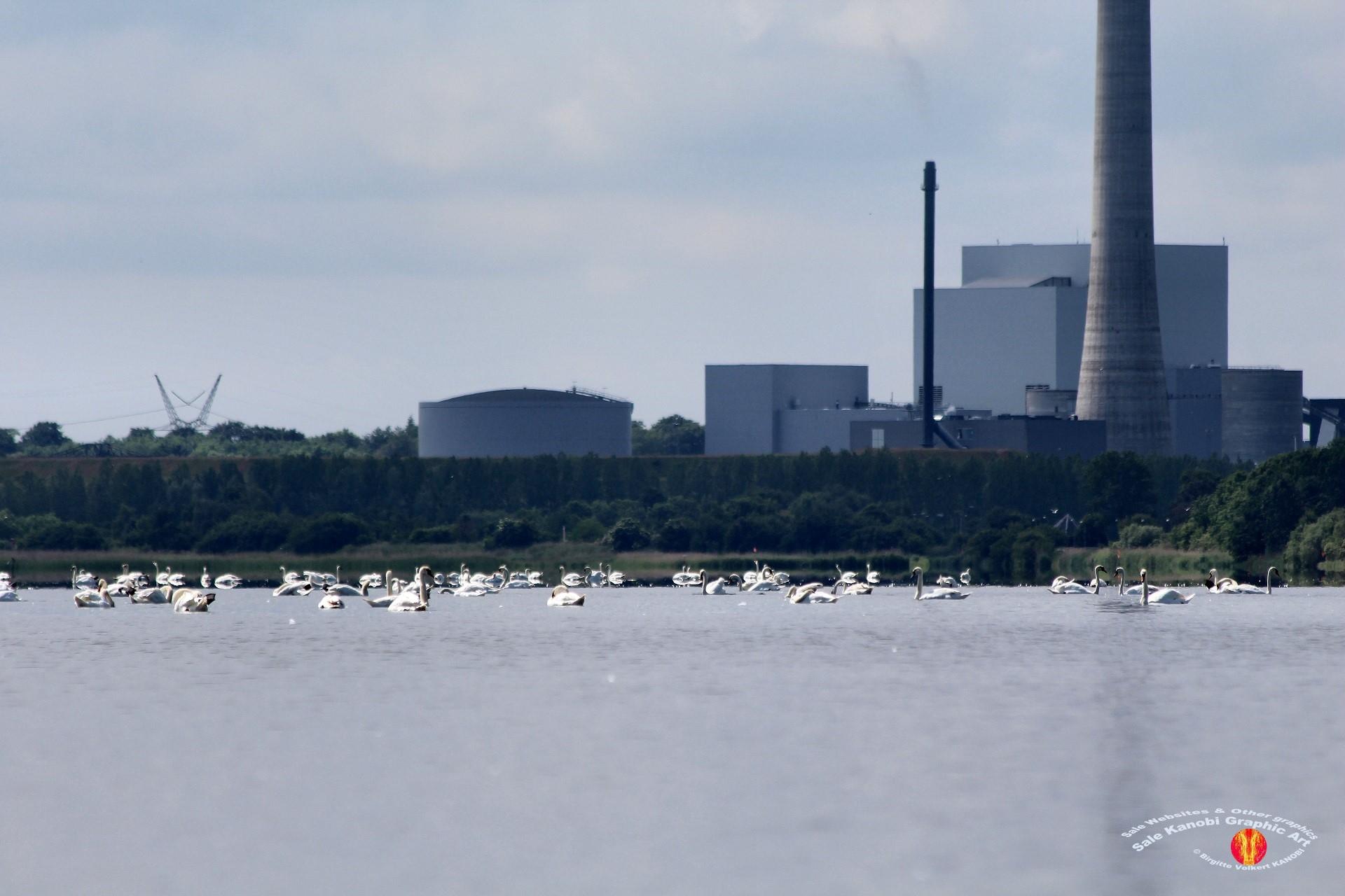 Odense Fjord Kayak 12