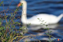 Otterup Harbour 23