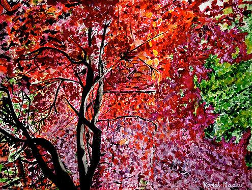 Autumn in Gandhi Park