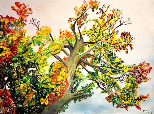 Autumn in Prince Edward County, Canada