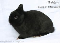 BlackJack_01.JPG