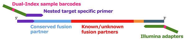RNA_Target_PCR2.png