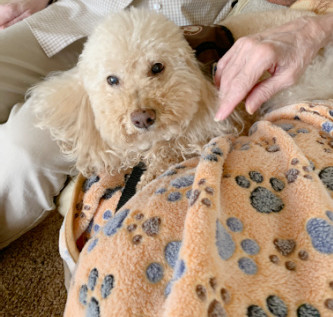 Benny is back to hospice visits