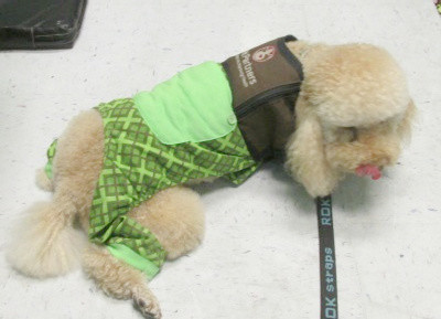 Why would a therapy dog wear pajamas?