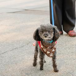 Teddy walking