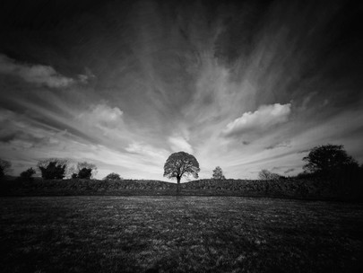 'The giants tree' by Claire Nugent, CB Camera Club