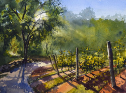 Evening at the Vineyard - Copy