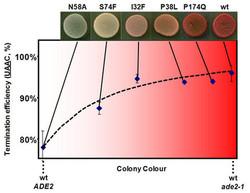Colony-Colour