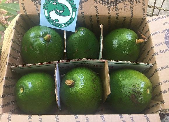 Florida Avocados 10lb Box (free shipping)