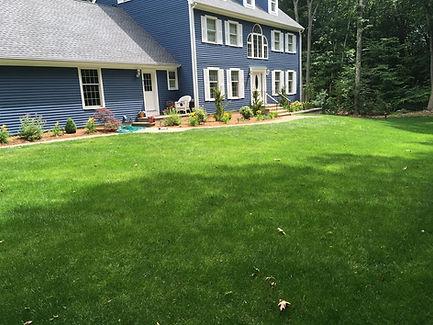 Lawn care, green grass