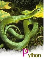 뱀 가죽 사진.PNG