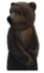 Grizzly_Cub_2.png