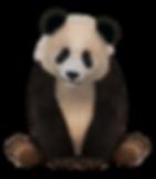 Panda_2.png