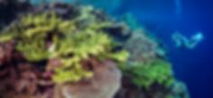 Munda Dive big reef RS.png