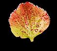 Herbst-Edition-Finale_0004_blatt_25.png