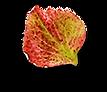 Herbst-Edition-Finale_0010_blatt_26.png