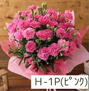 カーネーション ピンク加工済み.JPG