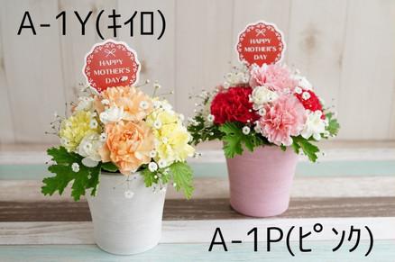 A-1Y(キイロ)/AP(ピンク)
