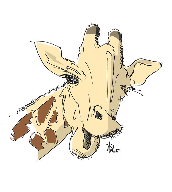 Karikaturen_Giraffe.jpg