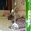 Thumbnail: Gato Egipcio Ocre