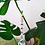 Thumbnail: Buho con colores chacras y Ojo Turco