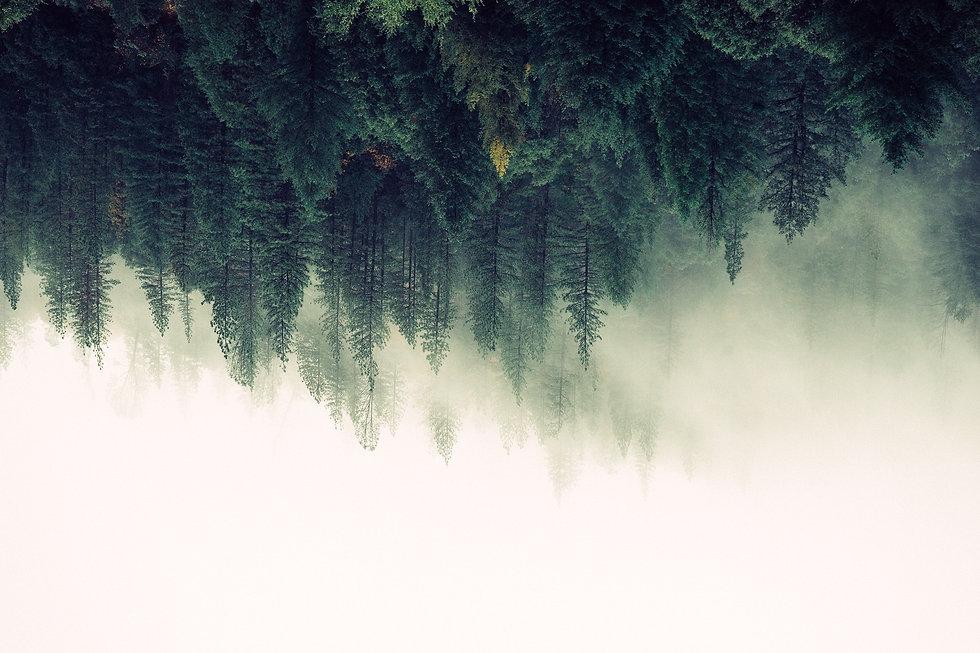 nature-forest-trees-fog-4827_edited_edit