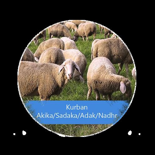 Kurban - Akika/Sadaka/Adak/Nadhr