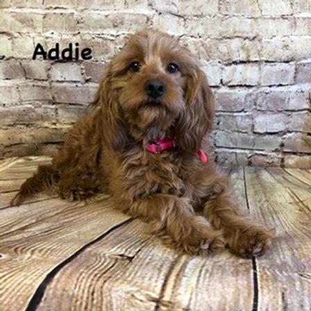 Addie.jpg