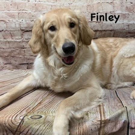Finley.jpg