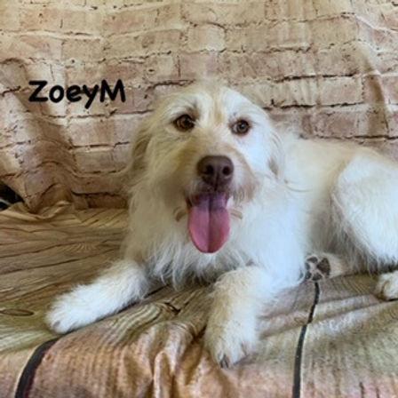 ZoeyM.jpg